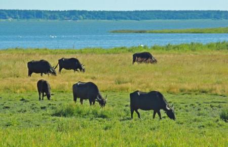 eine riesige Herde