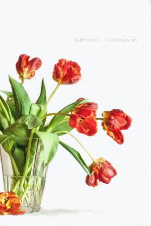 Blumen vor einem weissen Hintergrund, in der Vase oder auch pur arrangiert, lediglich ein Schatten verrät, daß sie nicht im freien Raum schweben.
