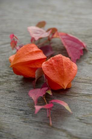 farbenfrohe Blätter und Früchte, die man draußen in der Natur finden kann